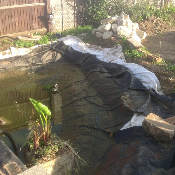 Vandals fail to fox Rotary ! - The ripped pond liner - back to the drawing board!