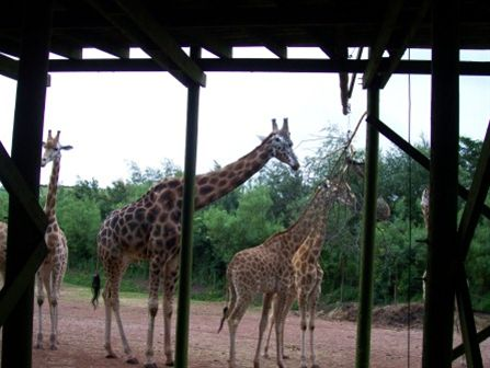 Kids Out 2011 - Visit to South Lakes Wild Animal Park -