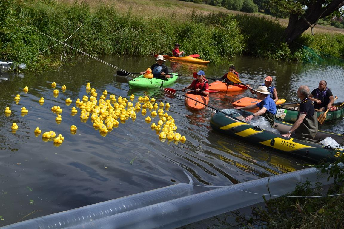 The Ducks being collected at the finishing line