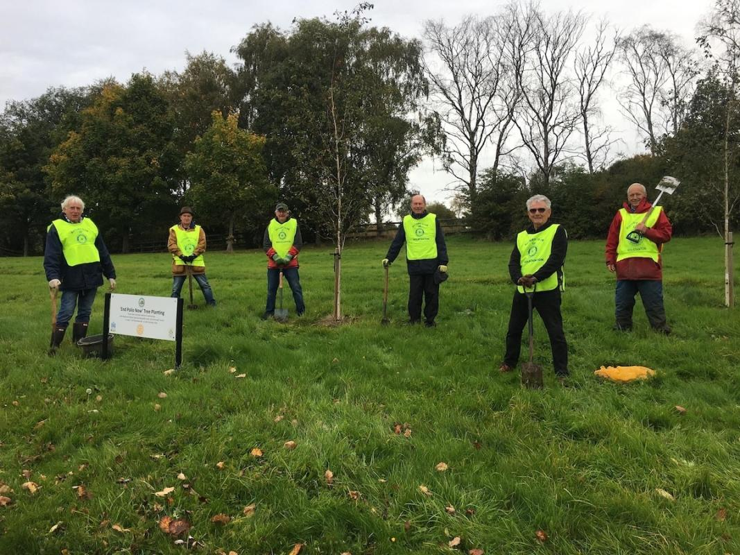 Planting crocuses for World Polio Day, 24th October 2020 - 6 Wolstanton Rotarians (complying with local Covid rules) led by David Morgan.