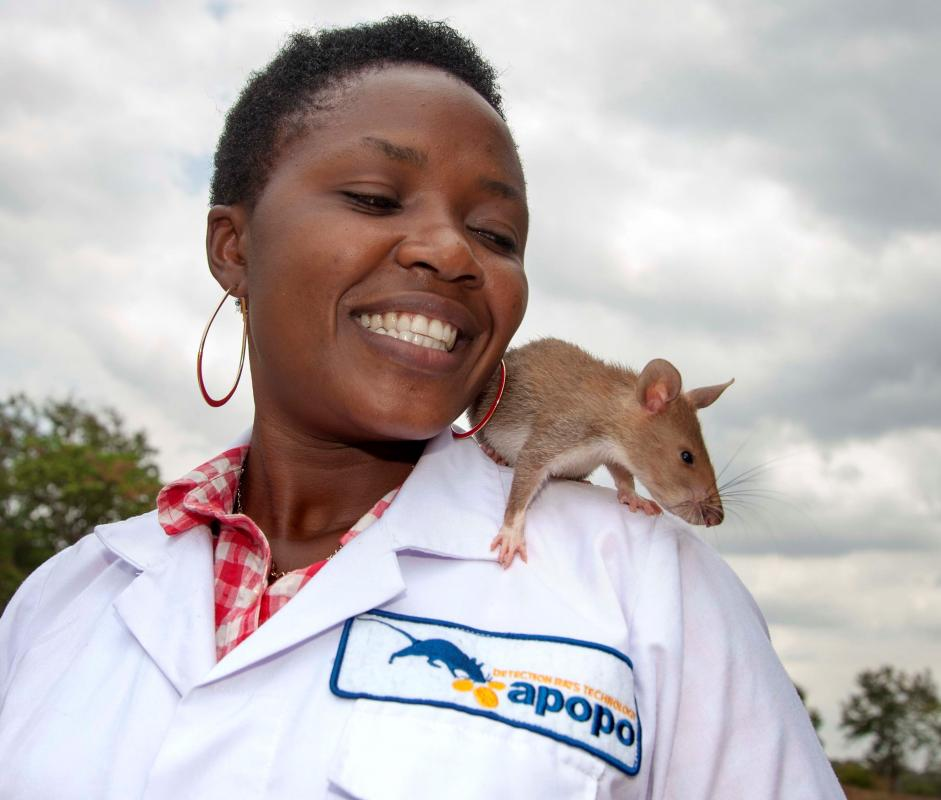 A 2018-2019 focus on Apopo hero rats: detecting landmines AND tuberculosis