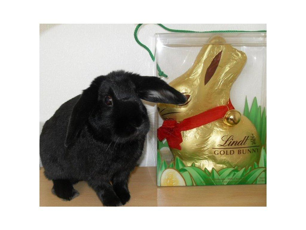 You could win one of these chocolate bunnies - but not the real one as well!!