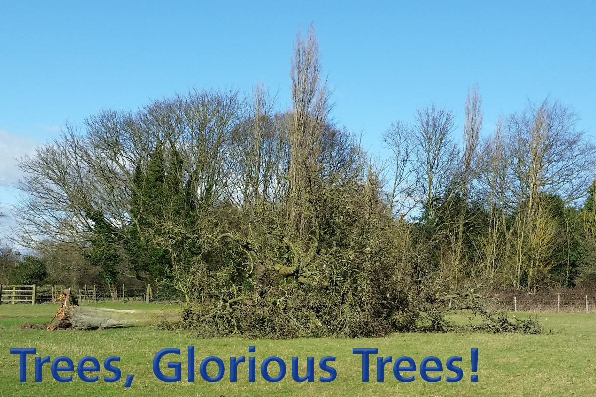 Trees and more Trees -
