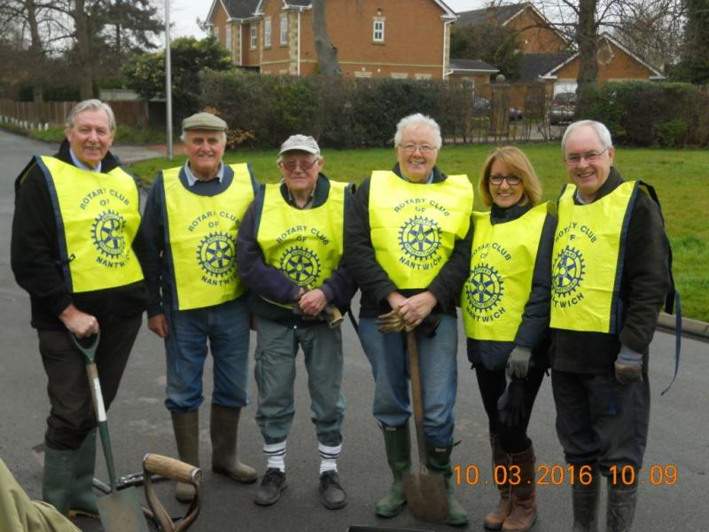 Nantwich Rotarians tree planting on Waterlode