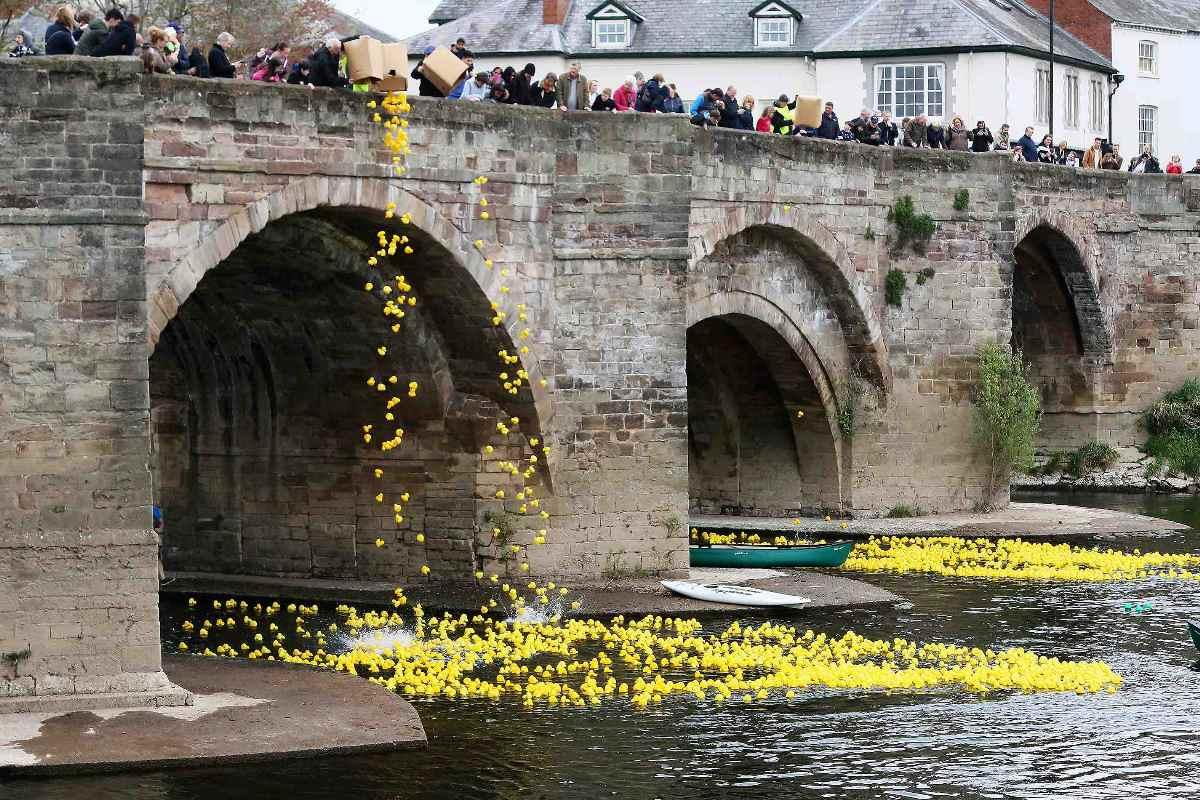Hereford River Duck Race 2017 - Over 3700 ducks being launched from the Old Bridge