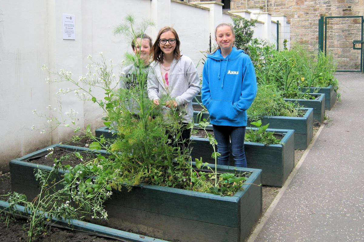 Local Community Activities and Charities - Enthusiastic pupils tend the Jean Scott fruit and veg garden at Hillhead Primary School