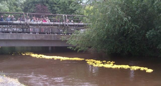 2,000 ducks race to the finish line