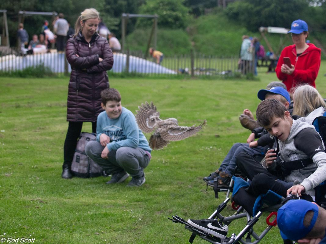 Kids enjoying the Falconry display
