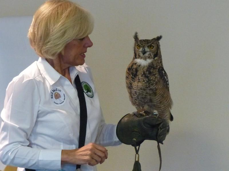 Club Meeting + Guest speaker Anita talking about Vocation - Rtn Anita Morris with Idris the African spotted Eagle Owl