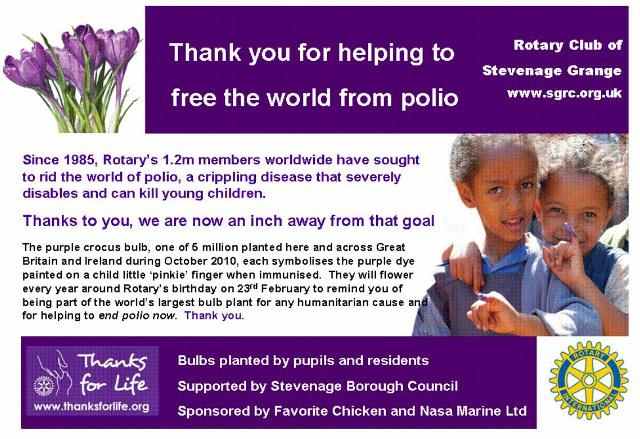 Stevenage gets stuck into planting purple crocuses to help end polio now