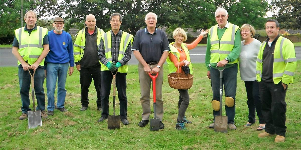 Members of Rotary planting crocuses in local verges