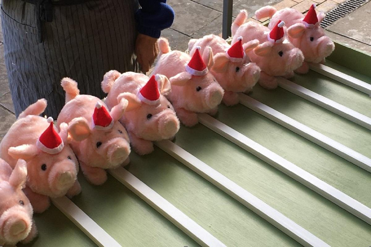 Woodley Winter Extravaganza - Festive pigs go racing