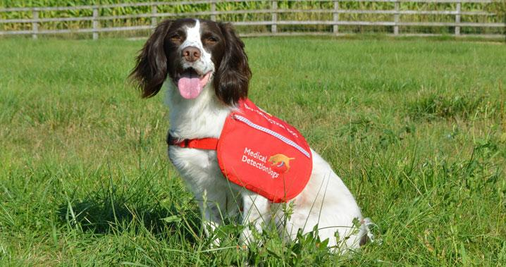 Talk about Medical Detection Dogs - Medical detection dogs