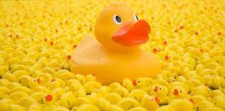 Dunblane Fling and Duck Race Saturday 25 May 11.00- 17.00 - Dunblane Fling and Duck Race Saturday 25 May 11.00- 17.00