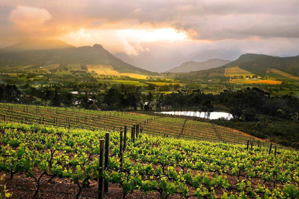 Cape Wines and Foods