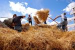 Oct 2017 Girton Memory Cafe - our theme is Harvest - threshing