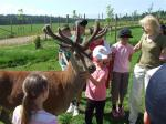 Hosting the Children fromChernobyl 2009 - Little Girl and a Deer