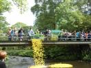 The start of the Duck Race. 2000 ducks racing for the honours. Turton Rotary Club