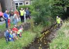 Duck race in progress
