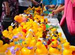 Kirkcudbright Rotary Duck Race - Excitement builds