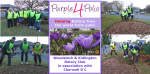 Purple 4 Polio click for details... - 16,000 purple crocus corms are planted on the Langford Lane roundabout in Kidlington.