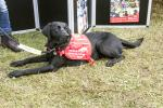 Thame Rotary at Thame Show - Medical Detection Dog