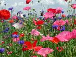 Brigg Rotarians sow their wild seed -