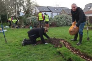 4,500 Purple Crocus Corms Planted at Specsavers (7 December 2017)