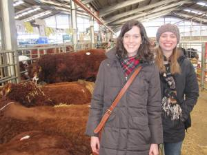 Foundation Students visit the Bull Sales in Stirling