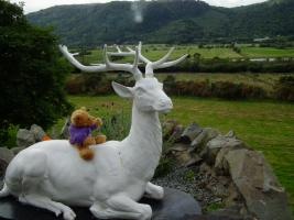 18 September 2016: Encounter with a Stag and Conwy friends