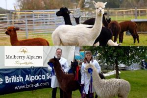 Lunchtime Meeting - 12.45pm - Speaker Rev Harry Edwards of Mulberry Alpacas