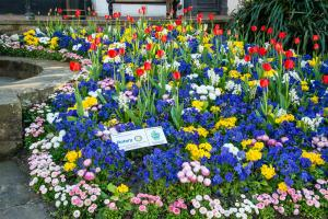 Rotary Club of East Grinstead Meridian Sponsors Flower Bed Planting in East Grinstead High Street