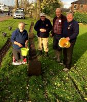 Crocus bulb planting in 2017