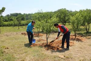 Tree planting protects the environment and can promote peace