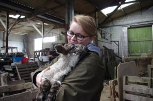 Farm visits to see lambs and calves