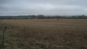 A field of Detectorists