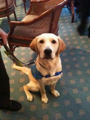 Guide Dog Blaize (2) 9 month update
