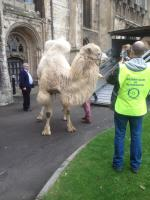 Camels at the Cathedral