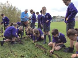 Crocus planting at Cleadon Academy