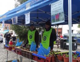 Hyacinth Bulb Selling - all monies go to good causes
