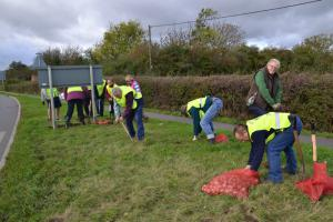 Daffodil bulb planting near the Bourne by-pass island.