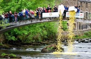 Duck Race and Fling