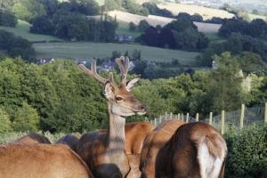 South West Deer Rescue Visit - 30th July 2015