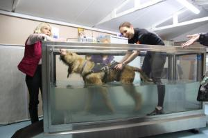Dog Hydro-therapy Visit - 3rd December 2015