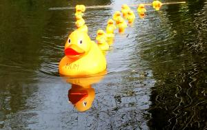 Farnham Duck Race