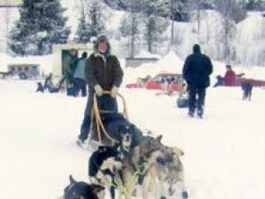 Rtn Frank Milner Dog Sleigh Racing in Lapland