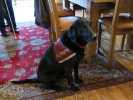 Lunchtime Meeting - 12.45pm - Hearing Dogs for Deaf People