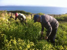 Cliff Path Howth Weed Clearing