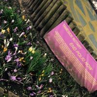 Planting Crocus - End Polio Now