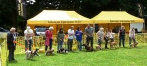 Charity Canine Capers free entry, donations welcome